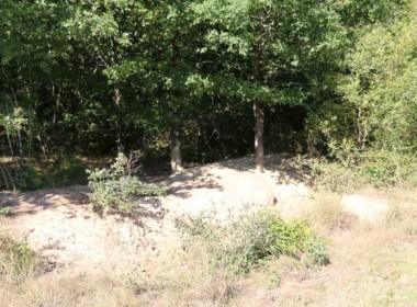 vente-propriete-chasse-sologne-est-157-hectares-2