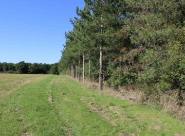 vente-propriete-chasse-sologne-est-157-hectares-5