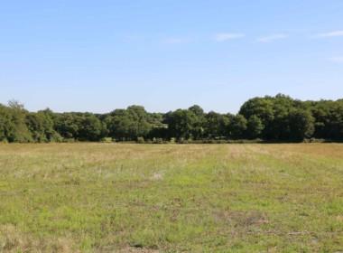 vente-propriete-chasse-sologne-est-157-hectares-6