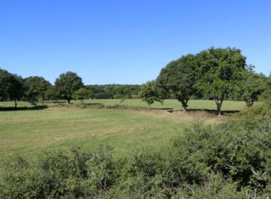 vente-propriete-chasse-sologne-est-157-hectares-7