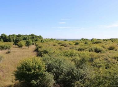 vente-propriete-chasse-sologne-est-157-hectares-8